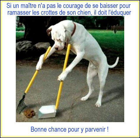 Affiche photo chien ramasse crotte