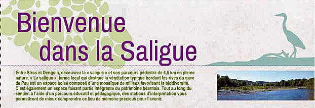 Bienvenue Saligue Site